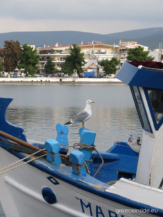 seagull on boat-Greece