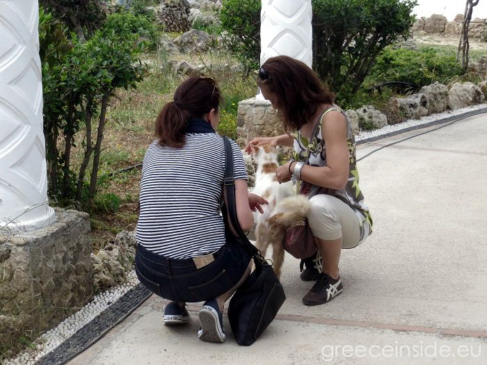 Cats of Rhodes